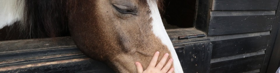 https://www.equidream.be/wp-content/uploads/2016/03/kind-en-pony-960x251.jpg
